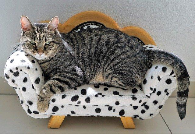 pohovka pro kočku